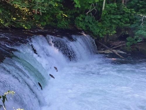 さくらの滝.JPG